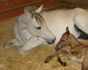 Elba Cruzalta (Bella) with her foal, Tigre do Summerwind