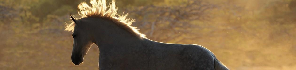 SW Future Foal