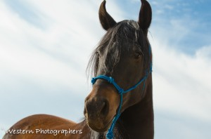 Summerwind_Marchador_horse_10
